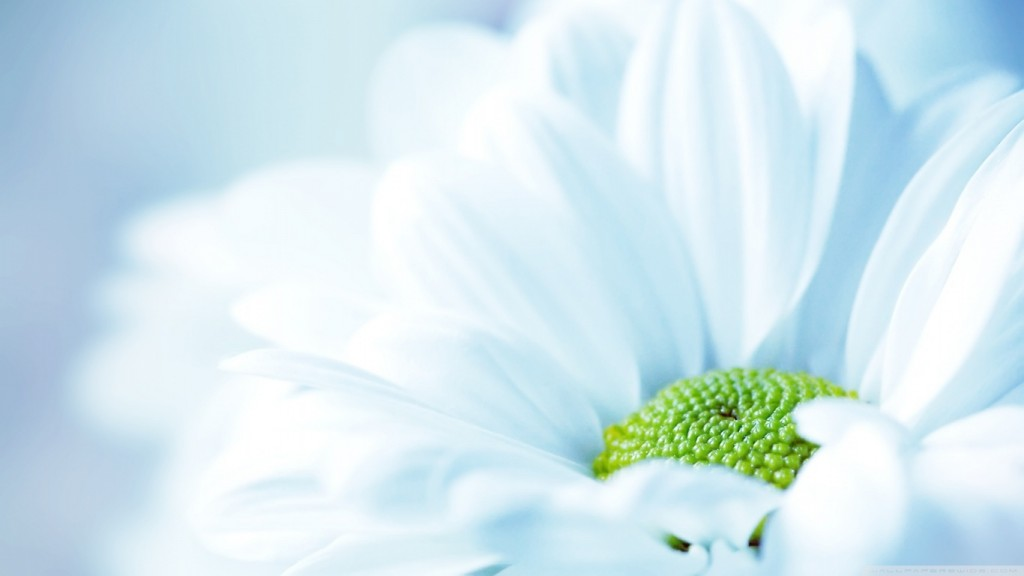 Màu trắng - màu sắc trong thiết kế Catalogue